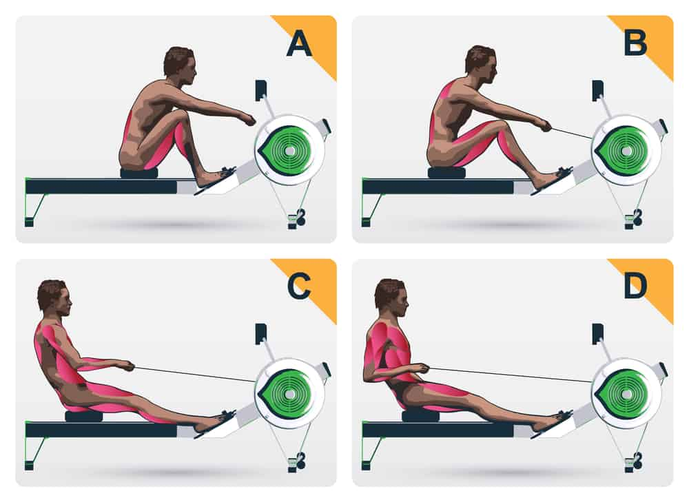 rowing machine target muscle group used